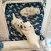 Puppies again!!