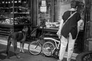 12th Sep 2021 - A dog's life - Cake shop