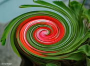 13th Sep 2021 - Pansy geranium abstract