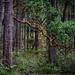 Madrona Branch Seeking the Light