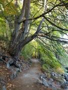 13th Sep 2021 - Trail Around the Lake