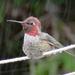 Hummingbird Cool-Down