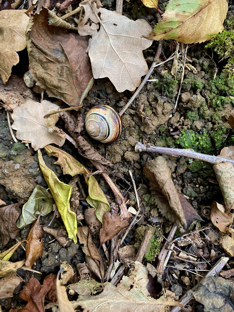 Snail shell  by tessky16