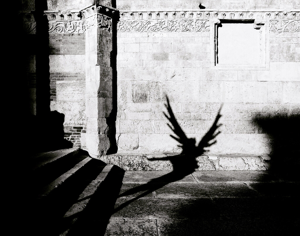 The fallen angel by caterina