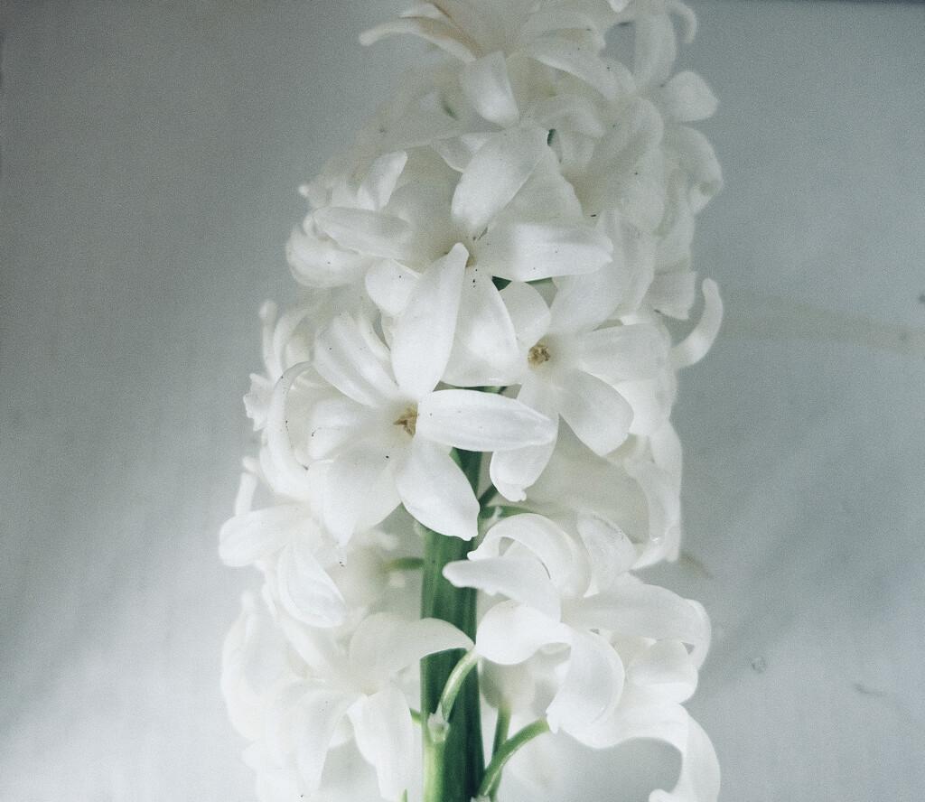 white on white.. by maggiemae