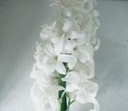 14th Sep 2021 - white on white..