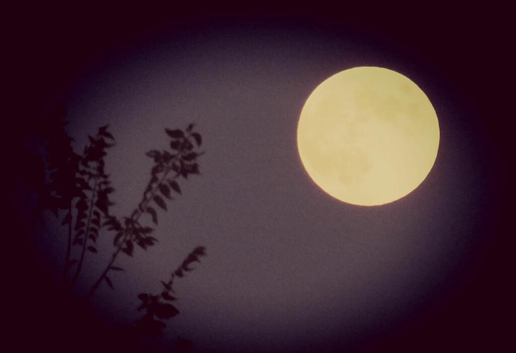 Moon Lighting by linnypinny