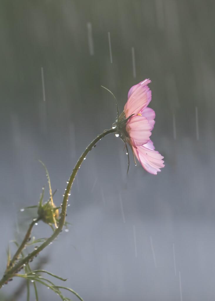 Much Needed Rain by shepherdmanswife