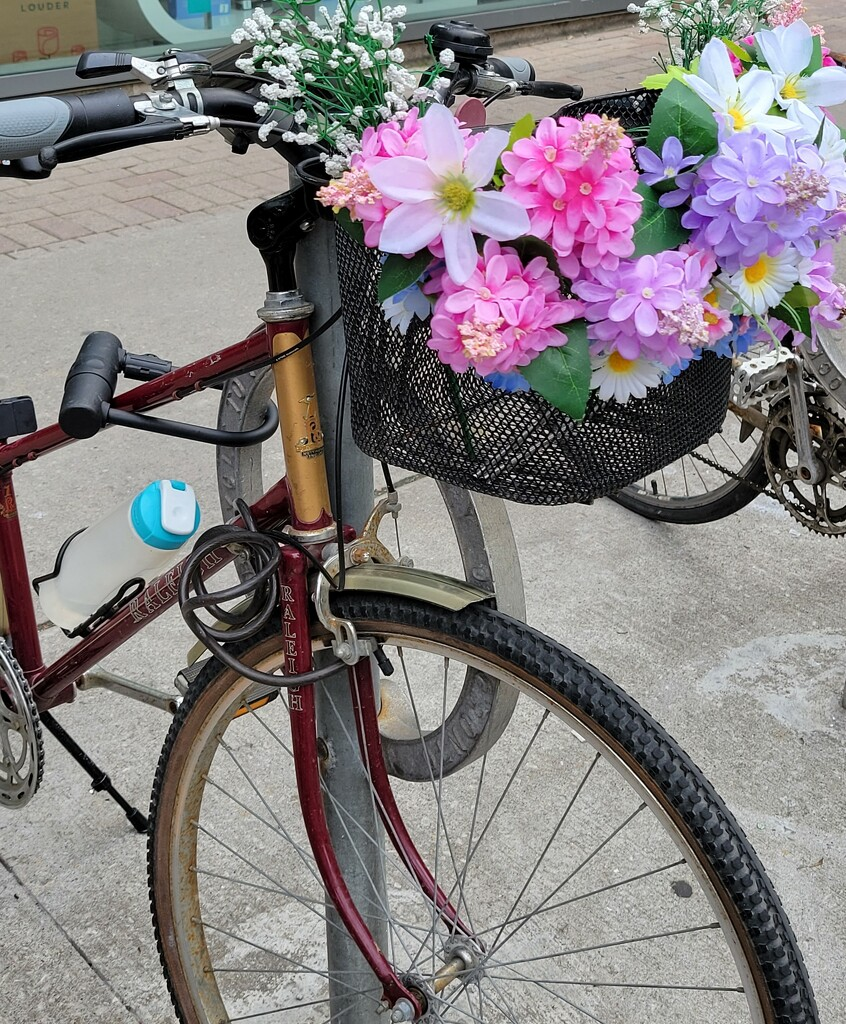 Bicycle Bouquet by 365projectorgheatherb