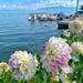 Dahlias by the lake.  by cocobella