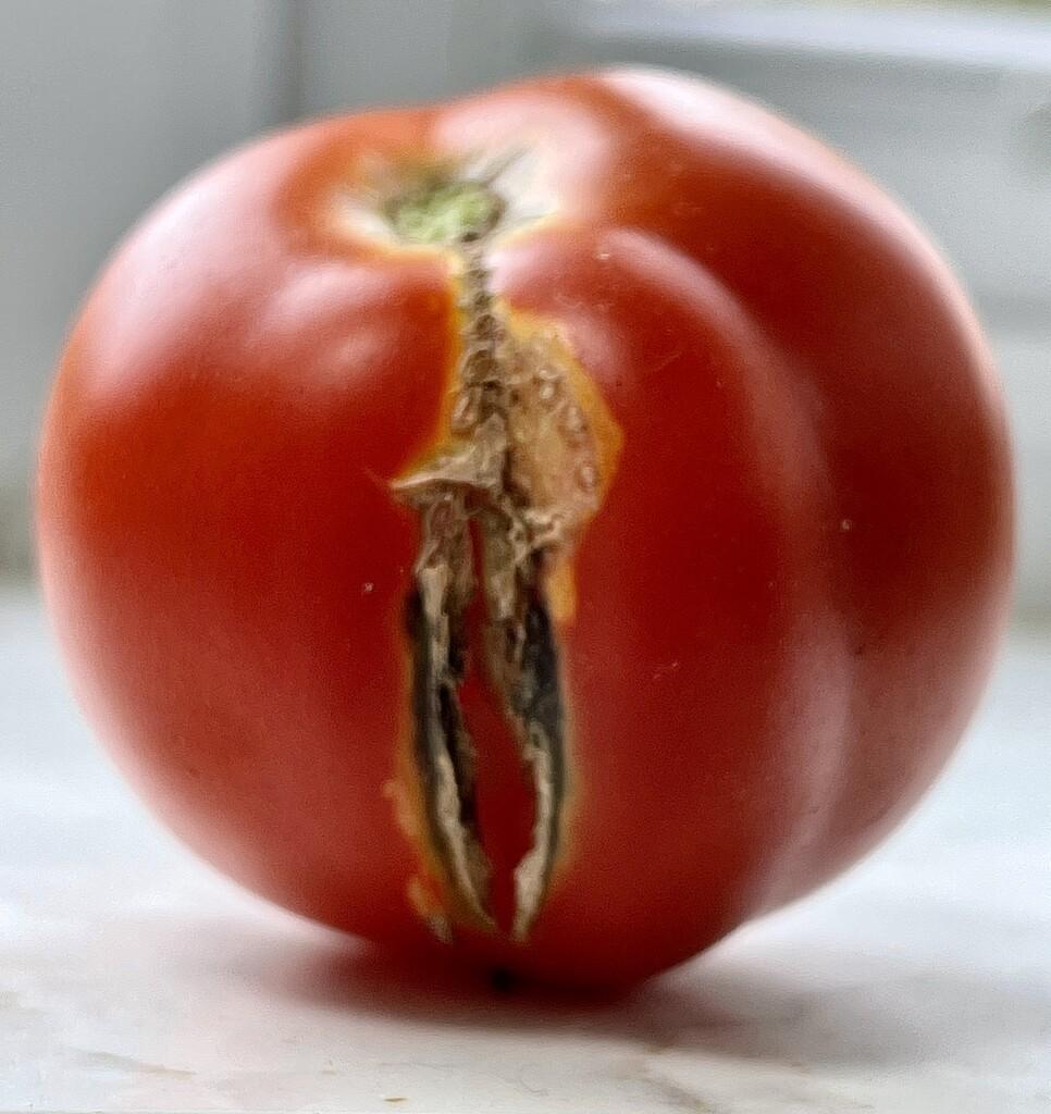 Broken tomato by tinley23