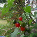 More Berries