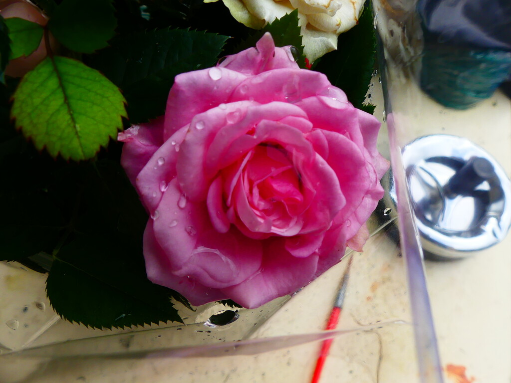 A Small Pink Rose by snoopybooboo