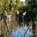Glen Iris wetlands