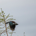 Tui in a hurry