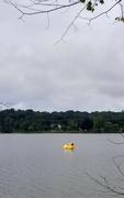 16th Sep 2021 - The Lake Q Duck