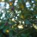 Kotukutuku - Fuchsia Excorticata