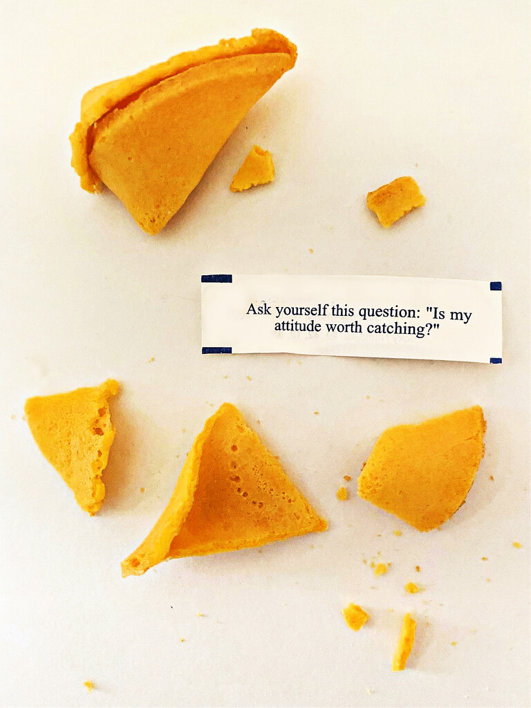 Fortune Cookie by peggysirk