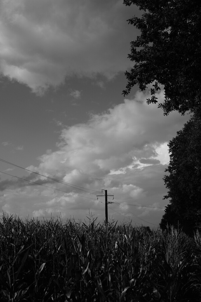 Electric Maize... by vignouse