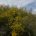 Sunflower Cascade