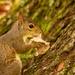 Squirrel Having a Snack!