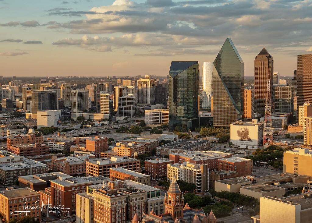 Dallas at Dusk by lynne5477