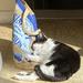 Cats sleep anywhere!