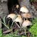 Mushrooms Gathering.