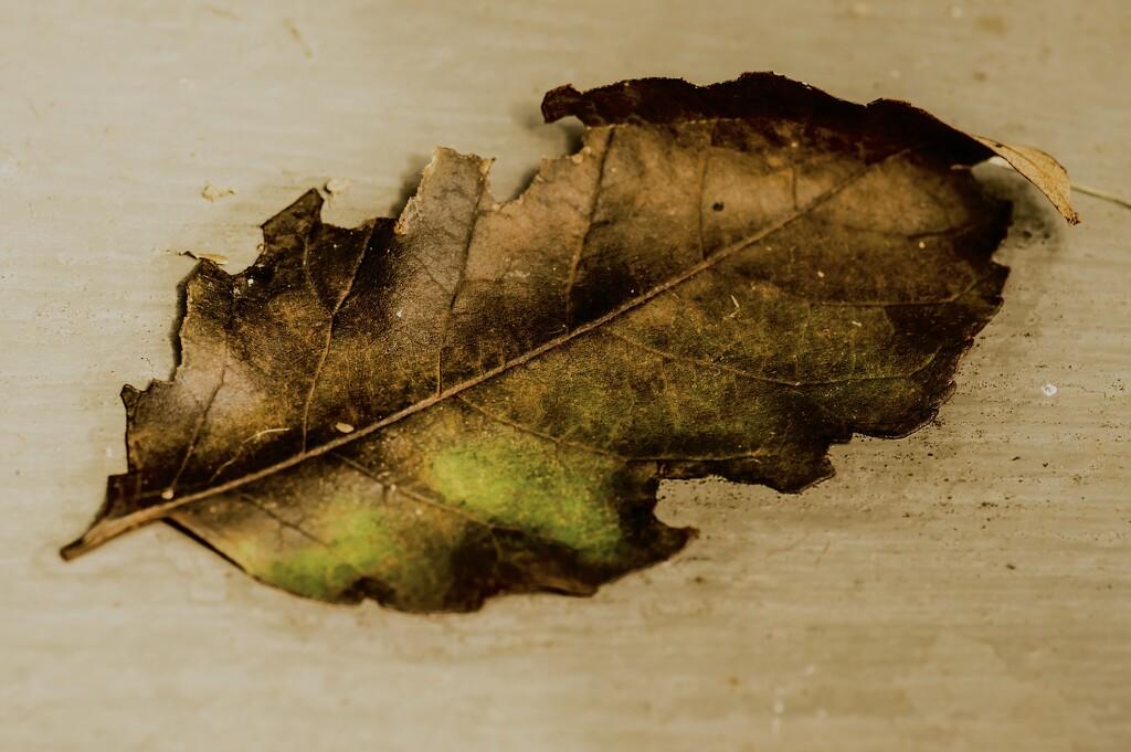 Leaf on my doorstep by mzzhope
