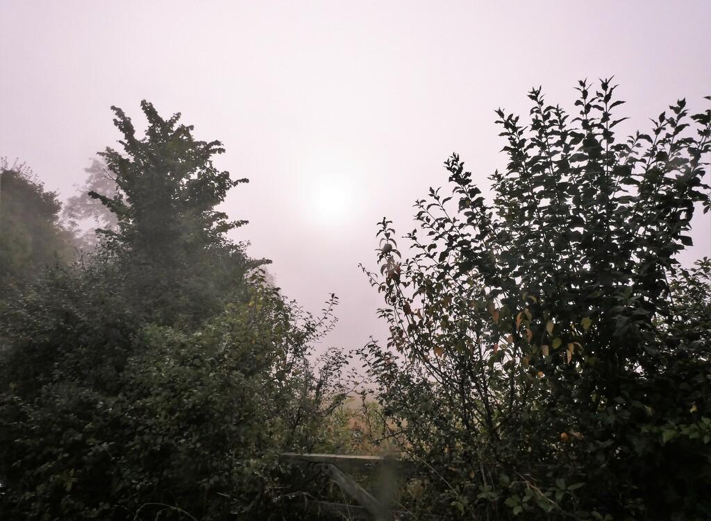 Misty morning by julienne1