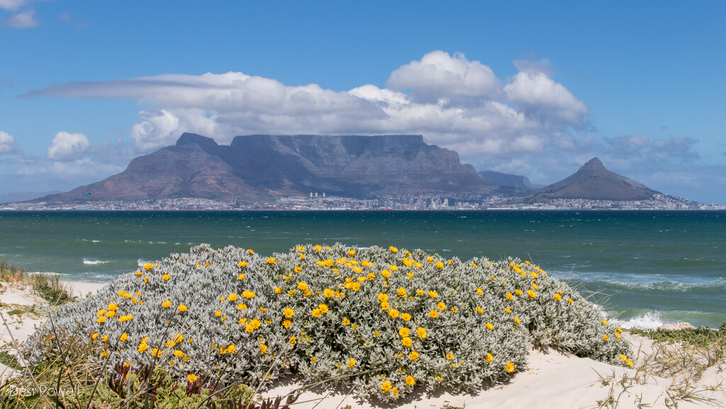 Our Blooming Beaches by seacreature