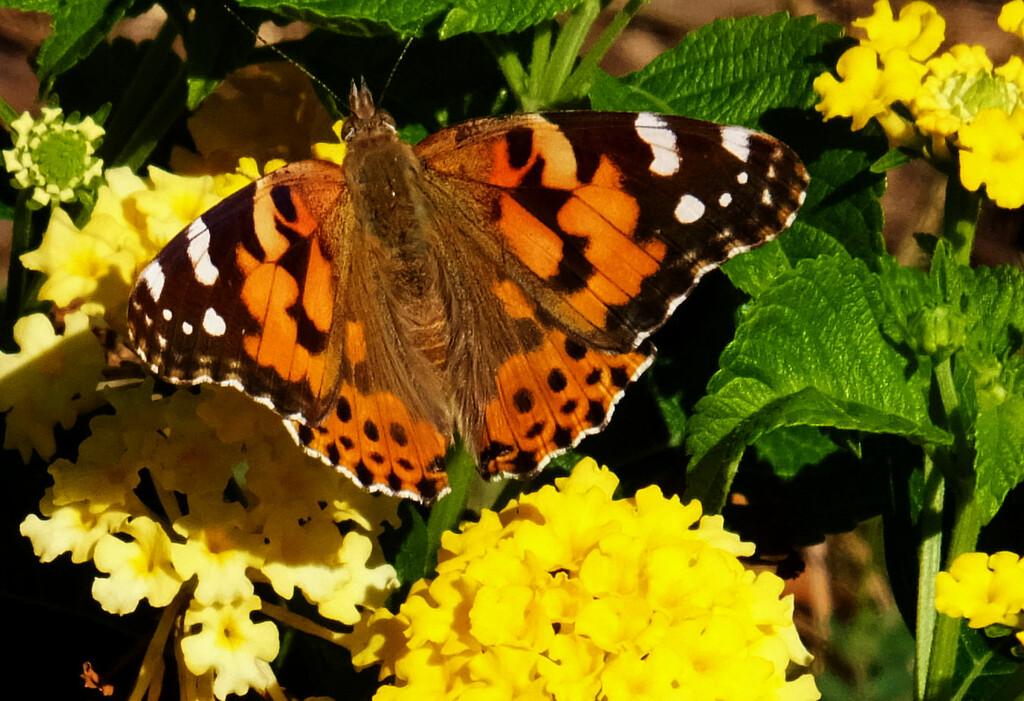 In The Garden by linnypinny