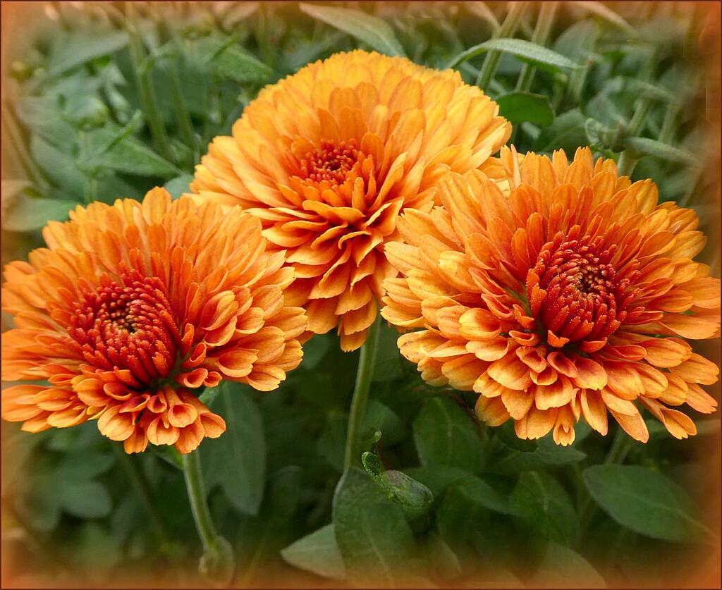 Autumn Flowers. by wendyfrost