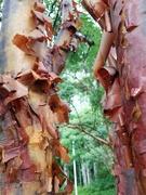 17th Sep 2021 - Peeling Bark
