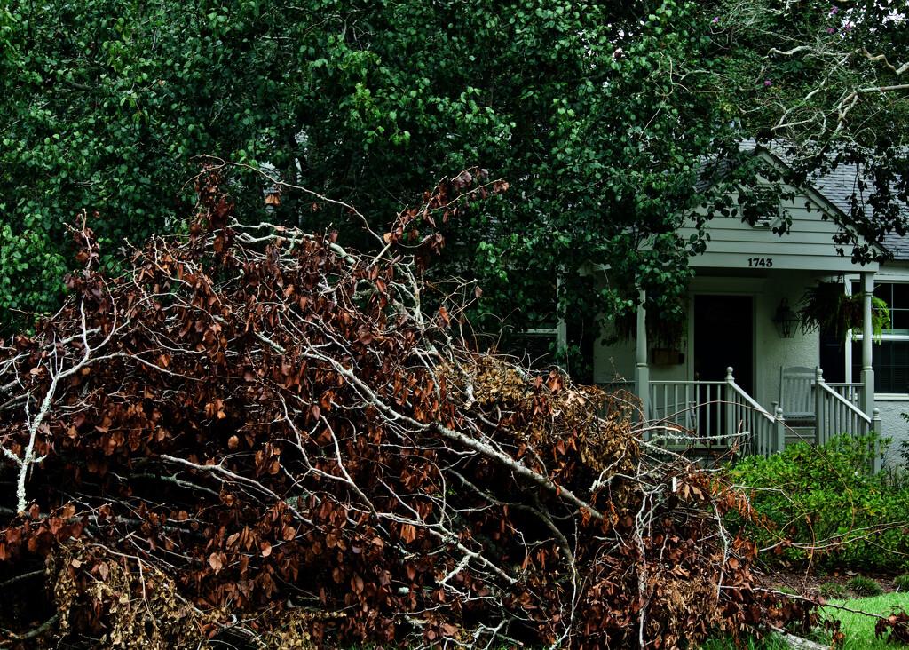Storm debris by eudora