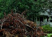 15th Sep 2021 - Storm debris
