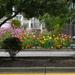 A bit of urban flower gardening