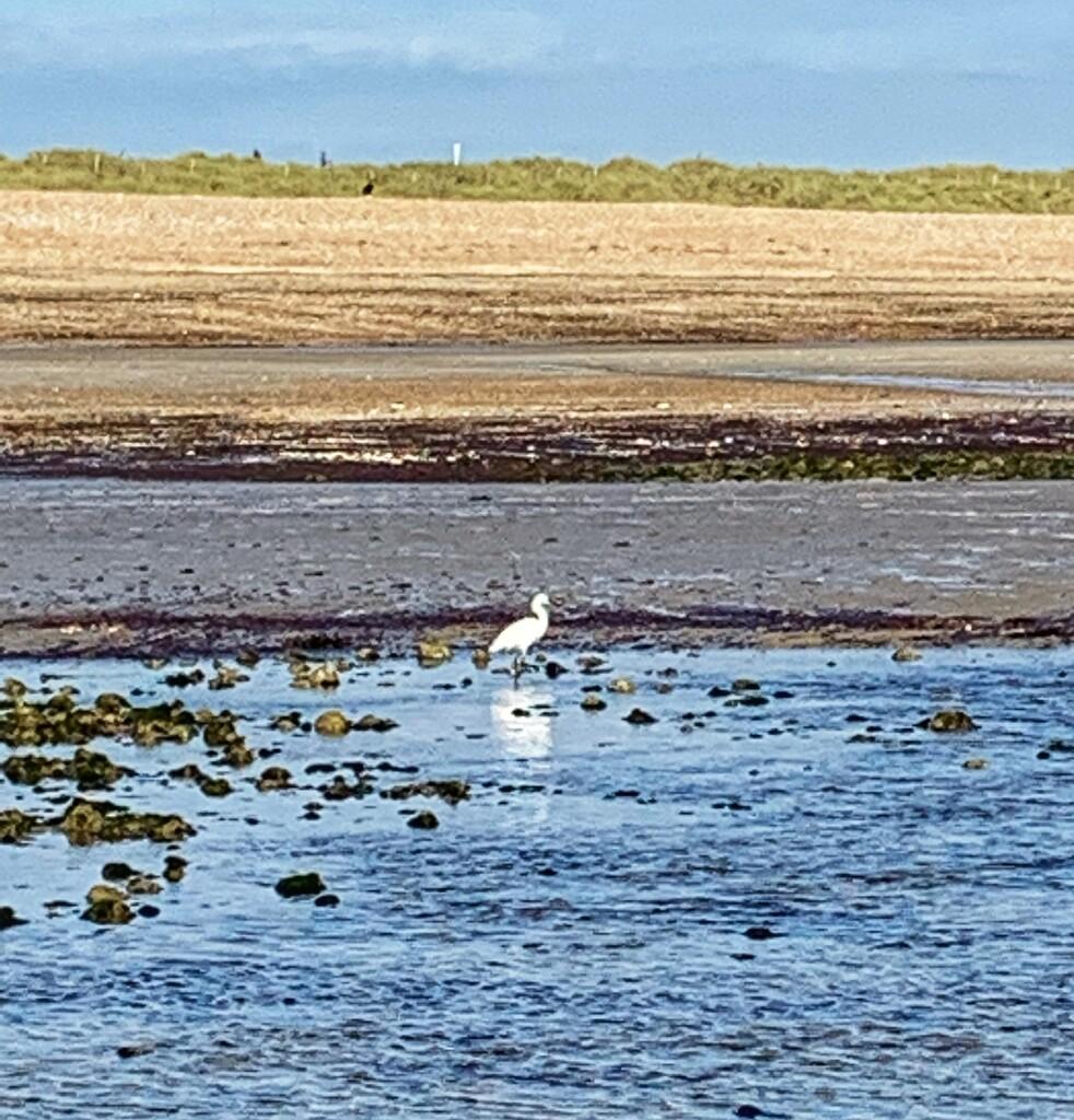 Low Tide by joyates