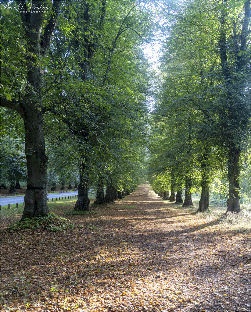 Avenue of Trees by pcoulson