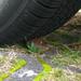 tire(d)