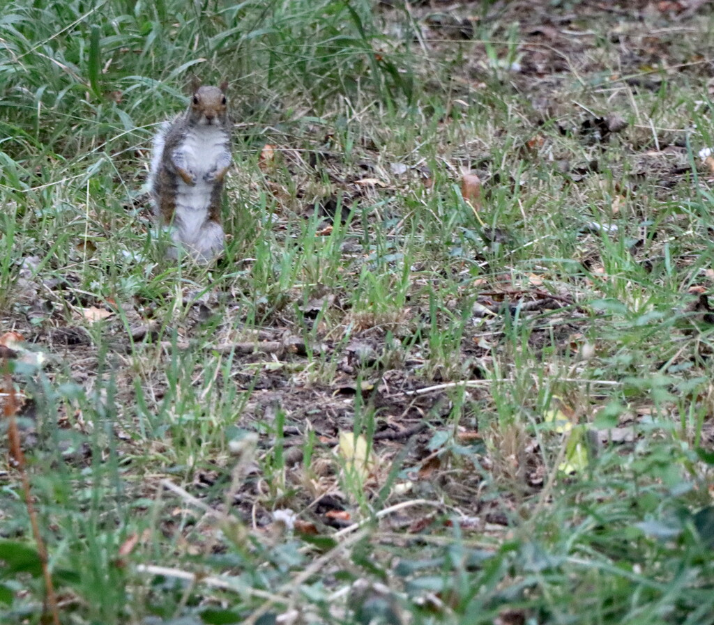 Are You After My Nuts? by davemockford