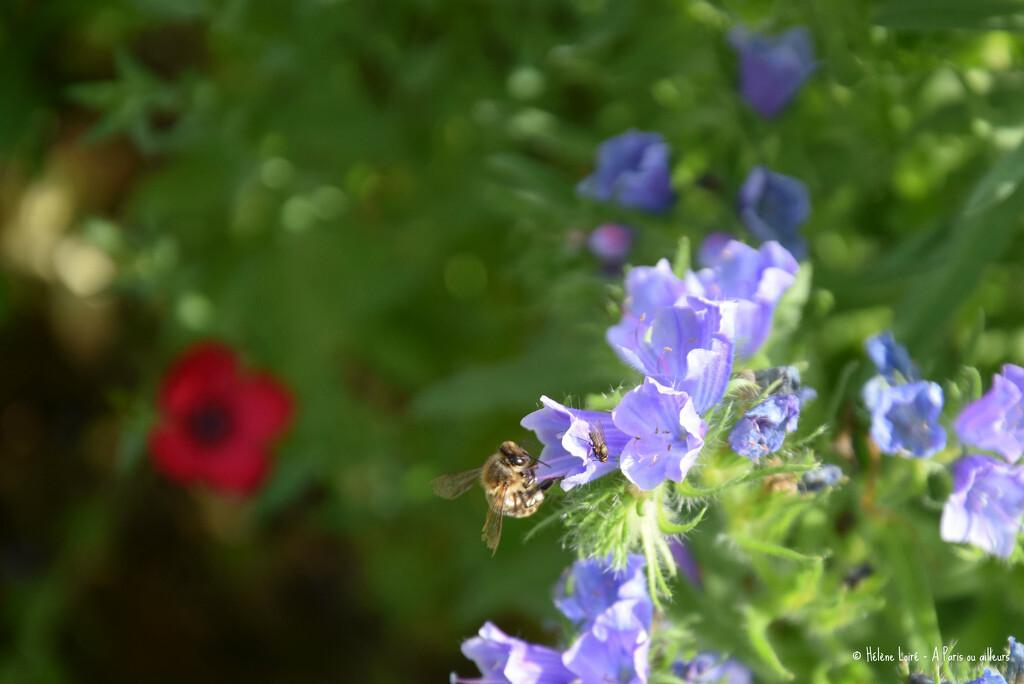honey bee by parisouailleurs