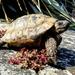 Bolt the tortoise