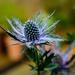 This Weeks's Flower