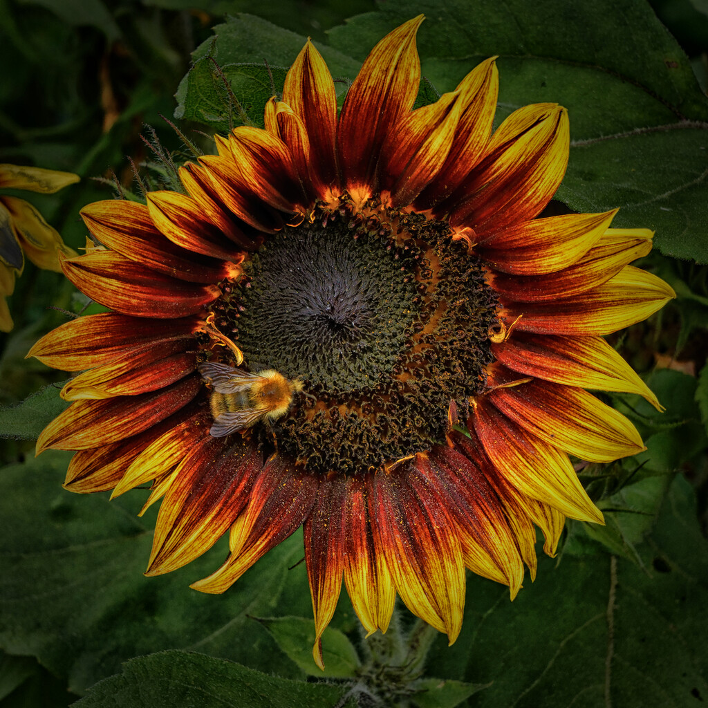 0919 - Pollinator at work by bob65
