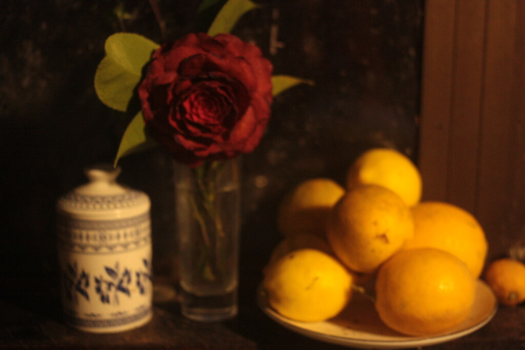Still life with camelia and lemons by kali66