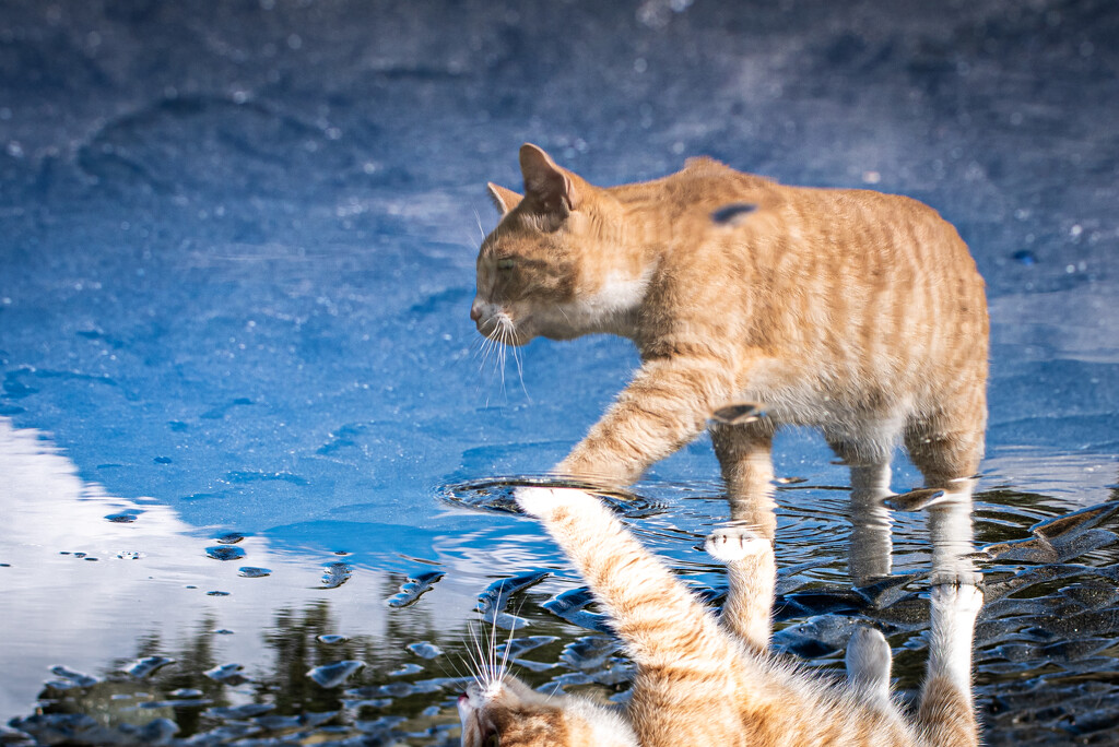 Reflected Gus by kwind