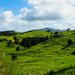 The green hills of...