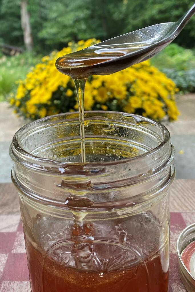 Local honey by tunia