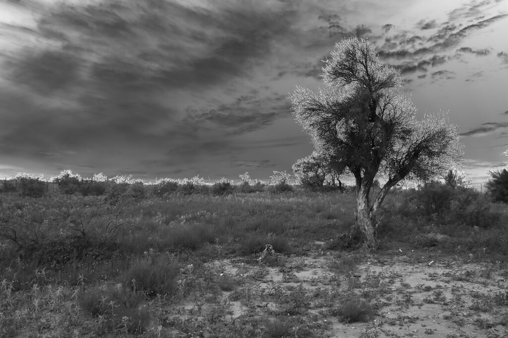 land, tree, and sky by blueberry1222